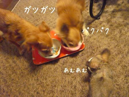 2009-01-18-09.jpg