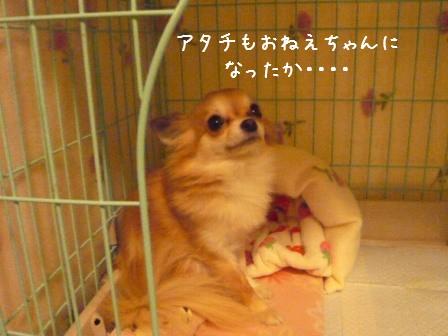 2009-01-20-07.jpg