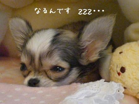 2009-01-22-03.jpg