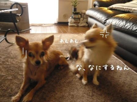 2009-01-26-02.jpg