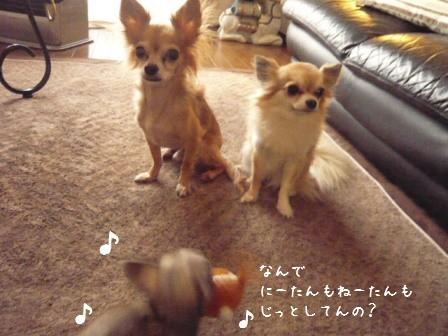 2009-01-26-03.jpg
