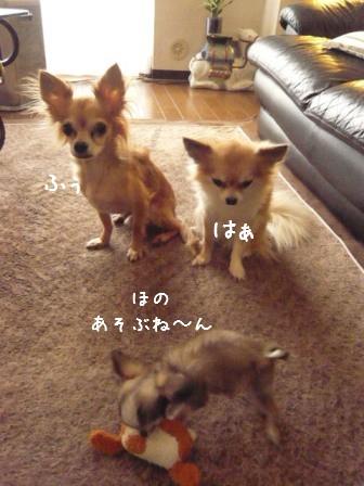 2009-01-26-04.jpg