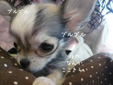 2009-01-29-03.jpg