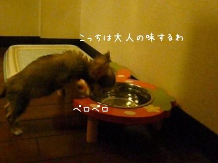 2009-02-12-03.jpg