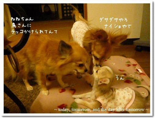 2009-03-17-01.jpg