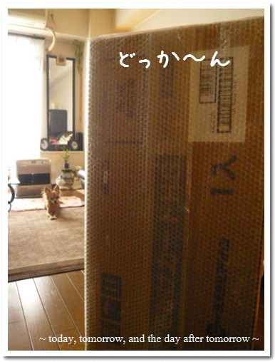 2009-03-31-01.jpg