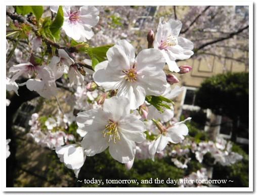 2009-04-08-02.jpg