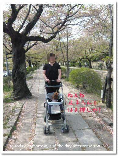 2009-04-13-10.jpg