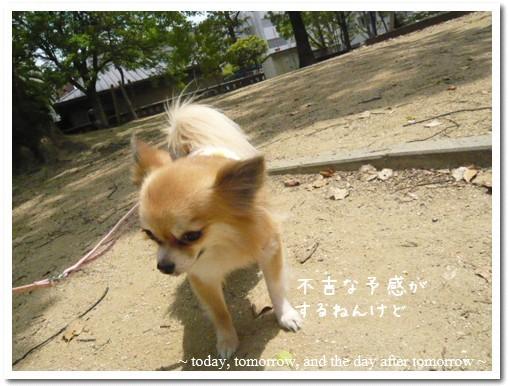2009-05-01-08.jpg