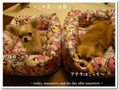 2009-05-18-003.jpg