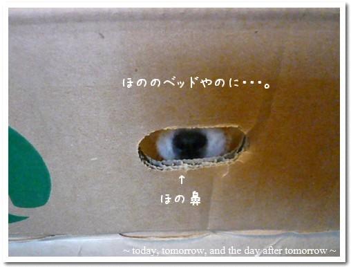 2009-05-23-04.jpg