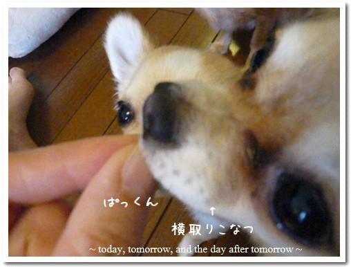 2009-05-23-11.jpg