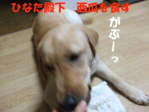 DSCF8427-a.jpg