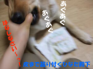 DSCF8428-a.jpg