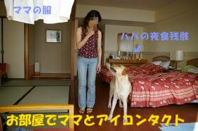 IMGP1123-a.jpg