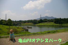 IMGP1269-a.jpg