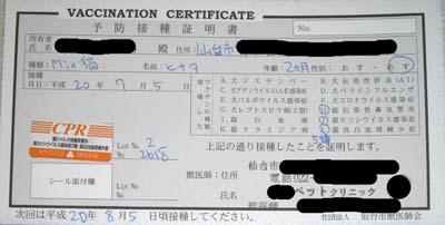 certificate -hinata-