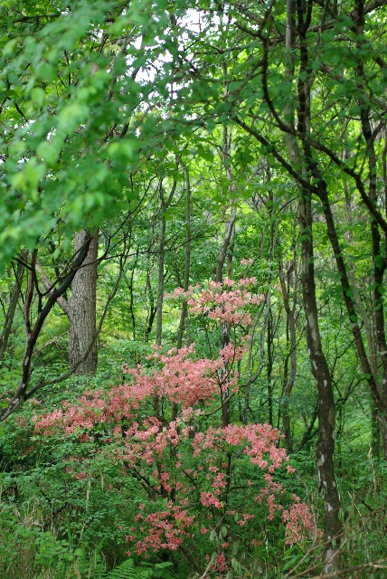 キャンプ場の林の中に咲く花