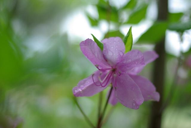 キャンプ場に咲く花