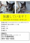 福山市で迷子犬を保護しました!