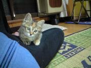 080930_cat04