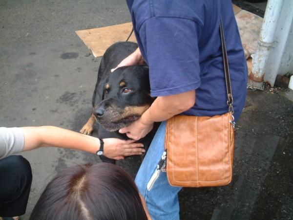 Resultado de imagen para 犬 rottweiler かわいらしい