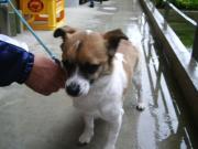 081221ビビリ犬タロウ