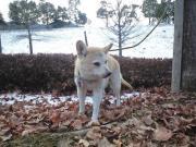 090125雪景色のココ