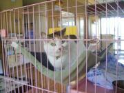 090419三毛猫さん