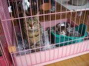090503 子猫の面倒見のいいトラちゃん