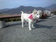 090226保護されている迷子犬