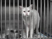 090214白猫