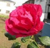 rosa090514cc