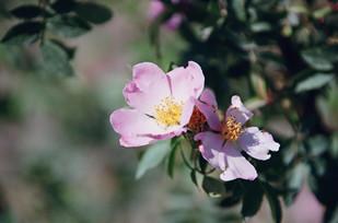 rosafarsi02