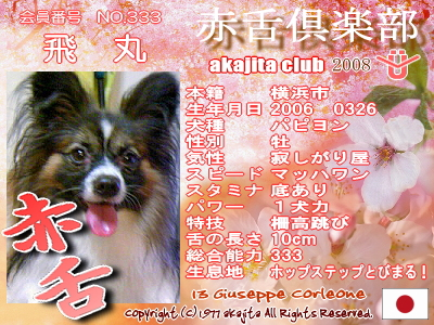 akajitaclub2008sakura-333-tobimaru.jpg