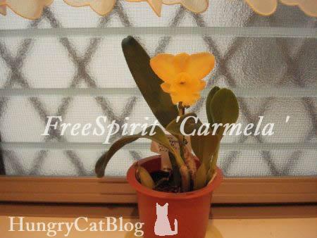 FreeSpirit 'Carmela'