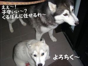 200809メイちゃん 001