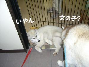 200809メイちゃん 003