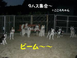 200809メイちゃん 007