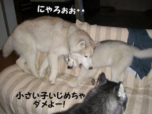 200809メイちゃん 010