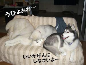 200809メイちゃん 011