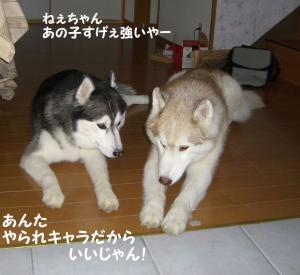200809メイちゃん 014