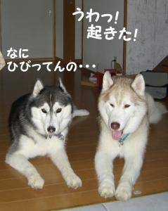 200809メイちゃん 016