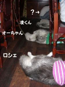 2008 HUS☆HUG 120