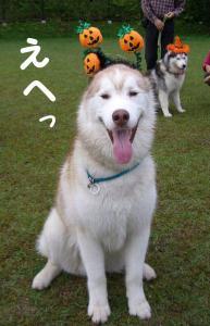 2008 HUS☆HUG 160