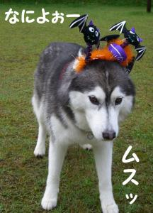 2008 HUS☆HUG 161