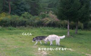 2008 HUS☆HUG 200