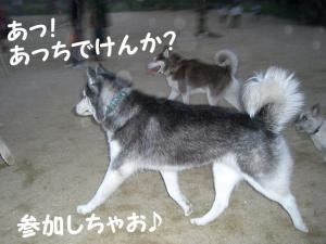 2008 9月大高ラン 006