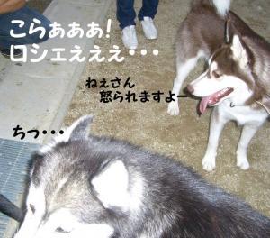 2008 9月大高ラン 013