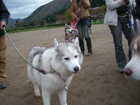 2008 11月京都ギグ 079(1)